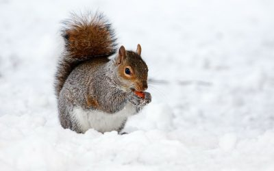 Un concepteur de formation, ça mange quoi en hiver?